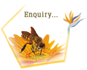 Little Bee Impex - Bulk Honey Suppliers